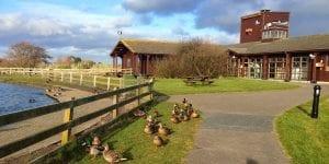 wexford wildfowl reserve near clayton whites hotel